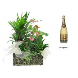Basket of plants and cava