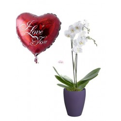 orquidea + globo