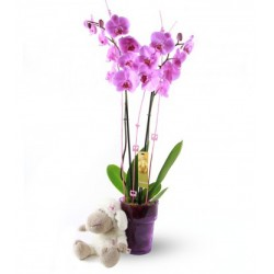 orquidea y peluche