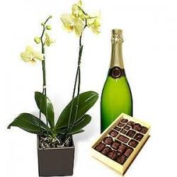 Orquídea exelent (excellent orchid)