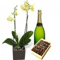 Orquídea exelent